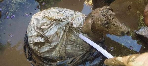 Cachorrinha é resgatada viva após ser amarrada em saco e jogada em rio