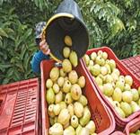 Empresa de fruticultura irrigada será instalada em Delmiro Gouveia