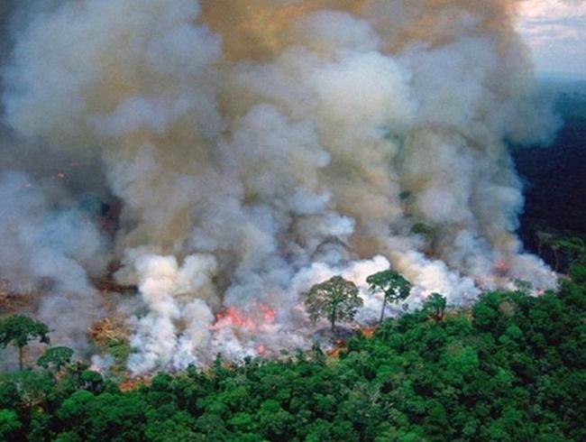 Famosos protestam contra incêndio na Amazônia