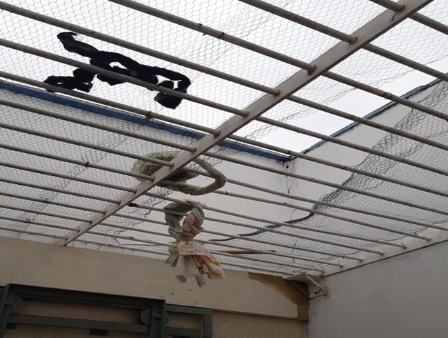 Quatro presos escapam do Cisp de Pão de Açúcar neste sábado (28)